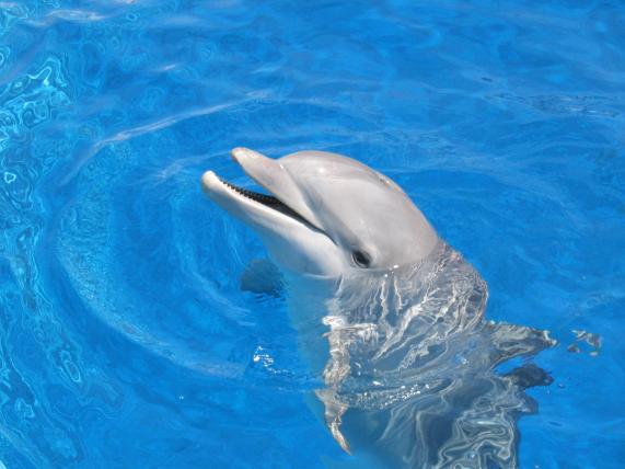 Delfin en el agua